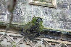 Gargoyle, Rothley church  © Leicestershire County Council
